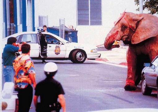 gajah10