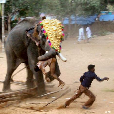 gajah3