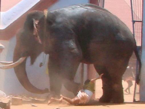 gajah4