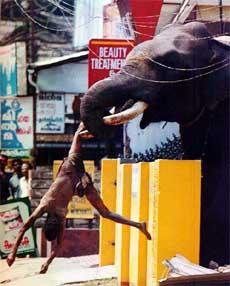 gajah5