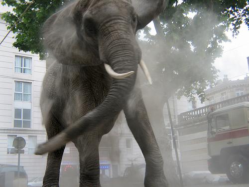 gajah7