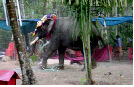 gajah9