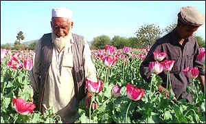 opium-3