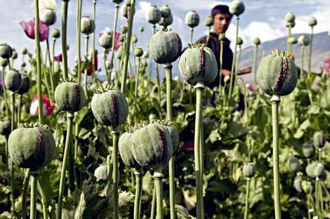 opium-4