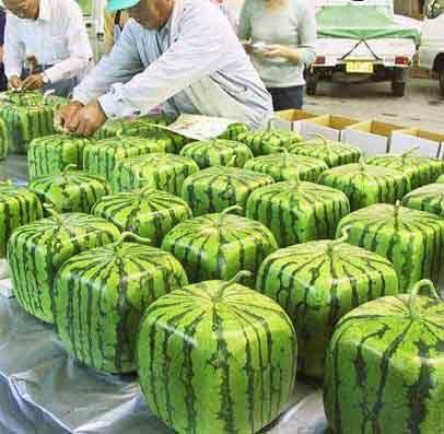 melon-5