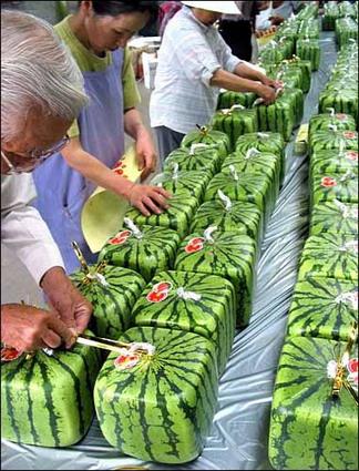 melon-6