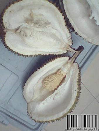 Unik, Ada Durian Dalam Durian