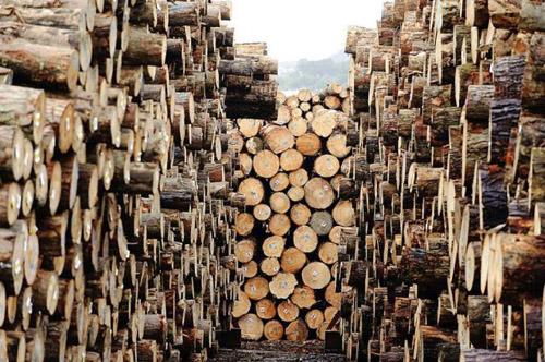 http://iwandahnial.files.wordpress.com/2010/10/kayu-1.jpg?w=500&h=332