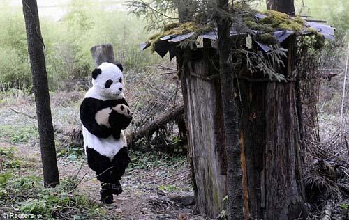 Bapak Angkat PANDA yang baik Hati