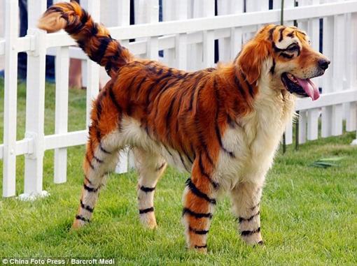 Pandabear | Nahh Anjing Kacuk Panda dan Harimau