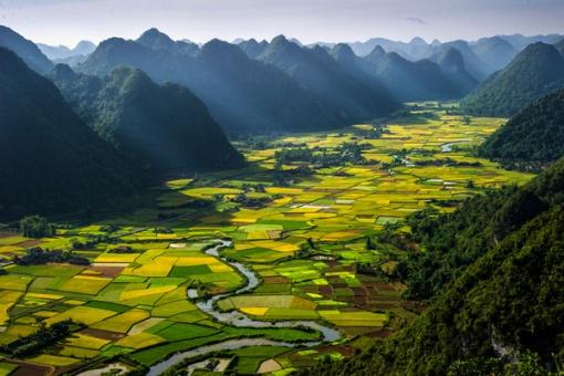 SAWAH VIETNAM