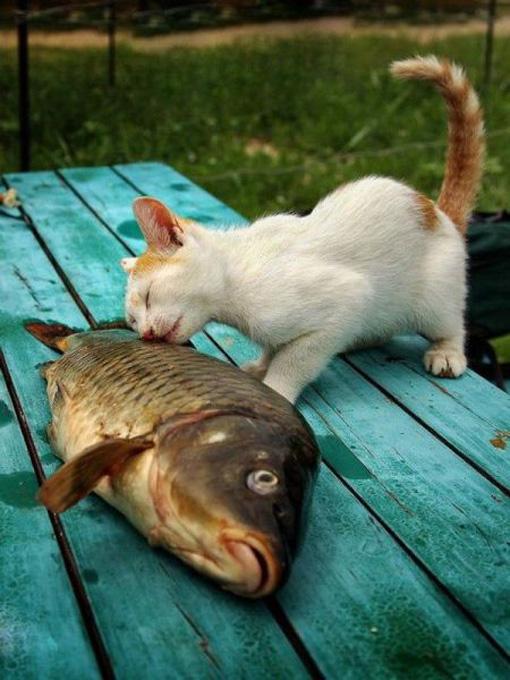 Download 68+  Gambar Kucing Warna Warni Paling Lucu Gratis