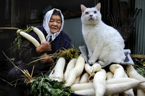 1. CAT