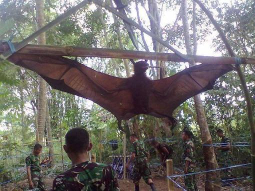 1. BAT