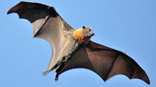 2. BAT