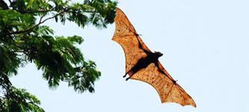 3. BAT