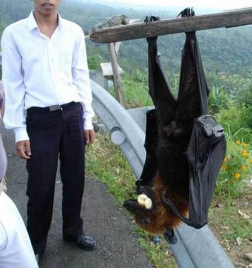 8. BAT